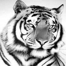 Tigra74